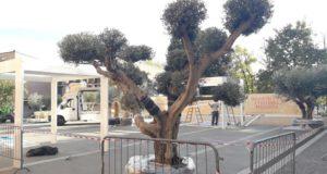 piazza calderari